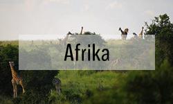 Turen går til Afrika - Vandring og safari
