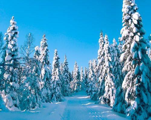 Forberedelse til 7 dage i Norsk hytte del 1.