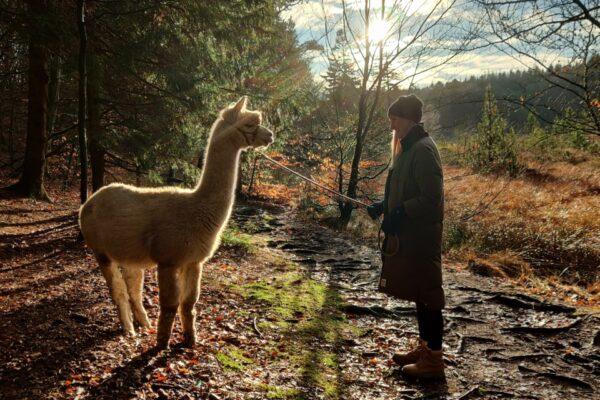 Turist i eget land – Alpacas of Fredly